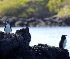 Galapagos | Big Five Tours