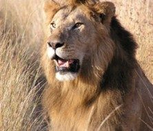Botswana | Big Five Tours
