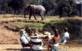 Dining With Elephants