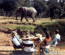 Elephants | Big Five Tours