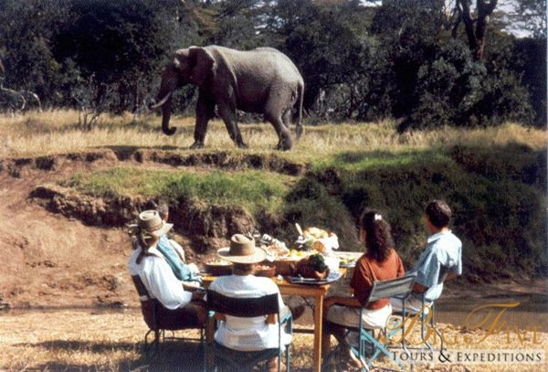 Elephants | Big Five Tours