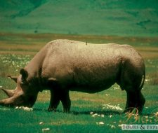 Rhino | Big Five Tours
