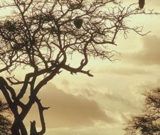 Kenya | Big Five Tours