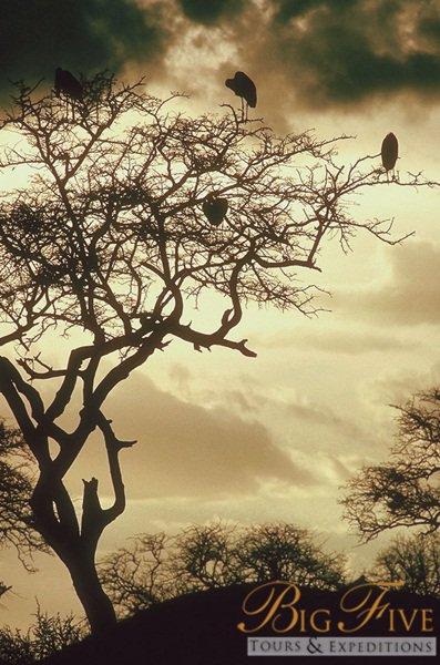 Kenya | Big Five Tours