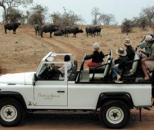 Safari | Big Five Tours