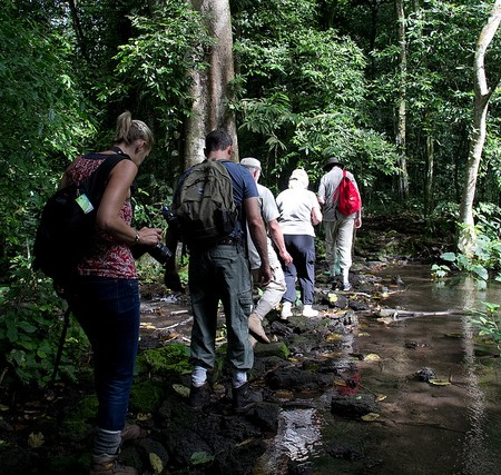 Forest Walk, Uganda