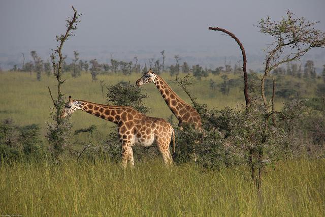 Giraffe | Big Five Tours