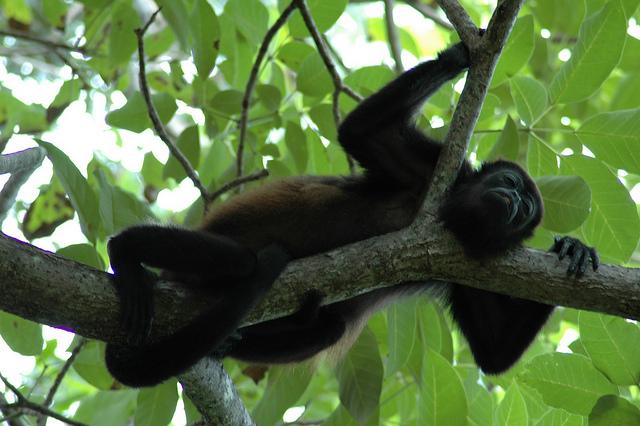 Parque Manuel Ant.Congo   Big Five Tours