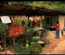 The-Cuisine-of-Honduras | Big Five Tours