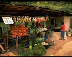 The-Cuisine-of-Honduras