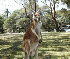 Kangaroo-Island | Big Five Tours