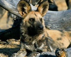 5-Odd-Animals-in-Africa