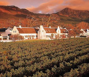 South Africa Vinyard
