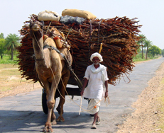 India camel and man