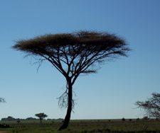 Kenya landscape | Big Five Tours