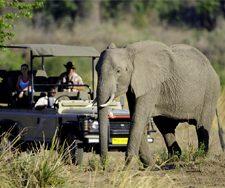 Zimbabwe Safari | Big Five Tours