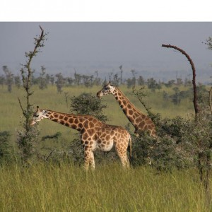 3 Surprising Facts about Uganda and Rwanda