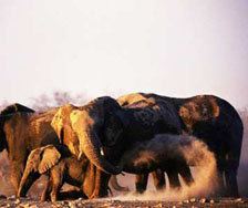 Etosha Elephants | Big Five Tours