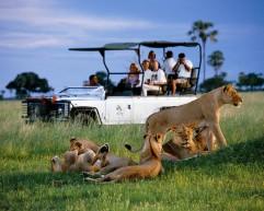 Botswana Safari - Lions