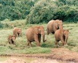 big-five-kenya-safari-elephants