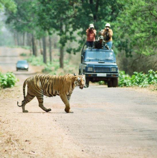 A shot from the Tadoba Andhari Reserve in Maharashtra, India