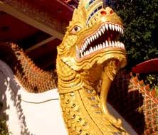 Thai dragon | Big Five Tours