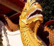 Thai dragon | Big Five Tours