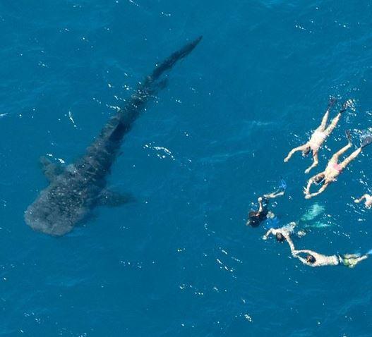 Whale-Shark-Ningaloo