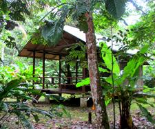Amazon cabin
