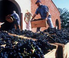 Wine | Big Five Tours