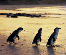 Penguins | Big Five Tours