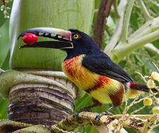 Costa Rica | Big Five Tours