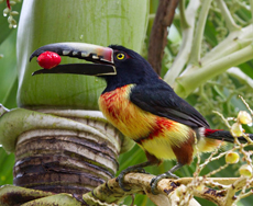 costa-rica_wildlife-thumb