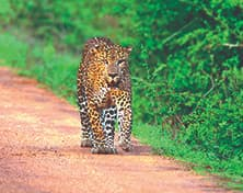 Sri Lanka | Big Five Tours