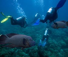 Diving | Big Five Tours