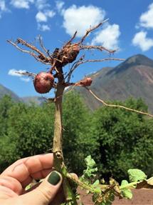 Peru Cusine