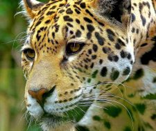 Guate | Big Five Tours