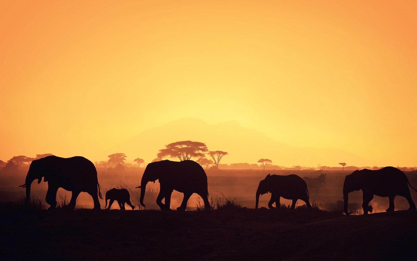Africa-Wallpaper-9